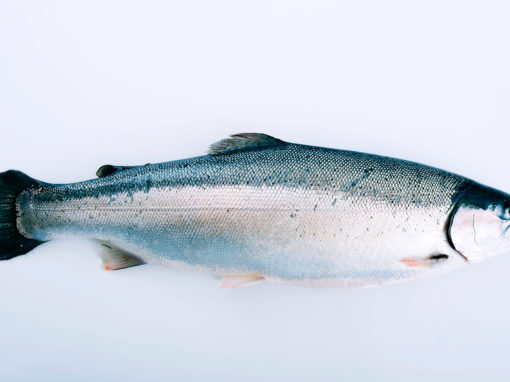 Fjord Trout